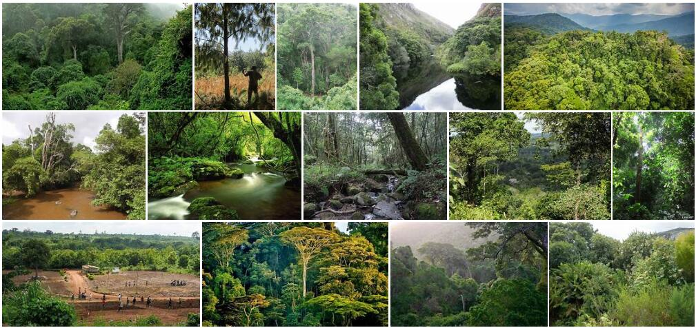 Africa Forestry
