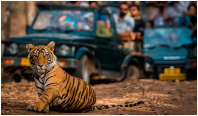 India's Golden Triangle and Tiger Safari